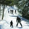 Grīvas meža trase atvērta slēpotājiem